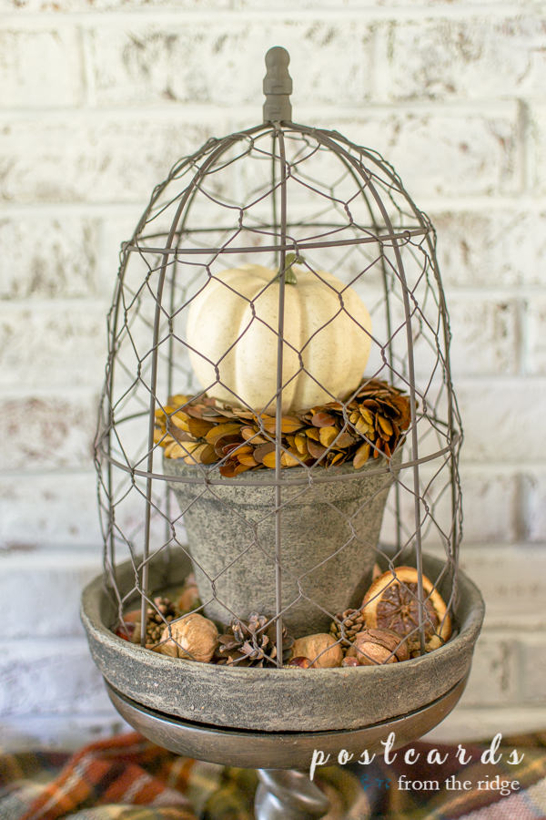 planter with chicke wire cloche and fall decor