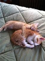 Gambar foto Kucing Lucu tidur dengan induknya