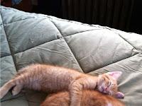 10 GambarLucu dan Manjanya Kucing Kalo Lagi Tidur . Kucing Kalian Bagaimana Gaya Tidurnya ?