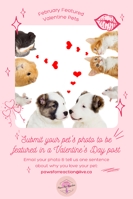 February featured pets: Be my furry Valentine