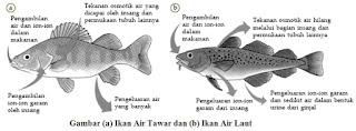 Sistem ekskresi ikan