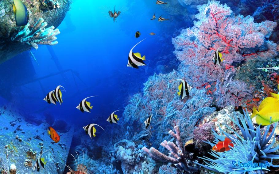 67+ Gambar Pemandangan Dalam Laut Terbaru