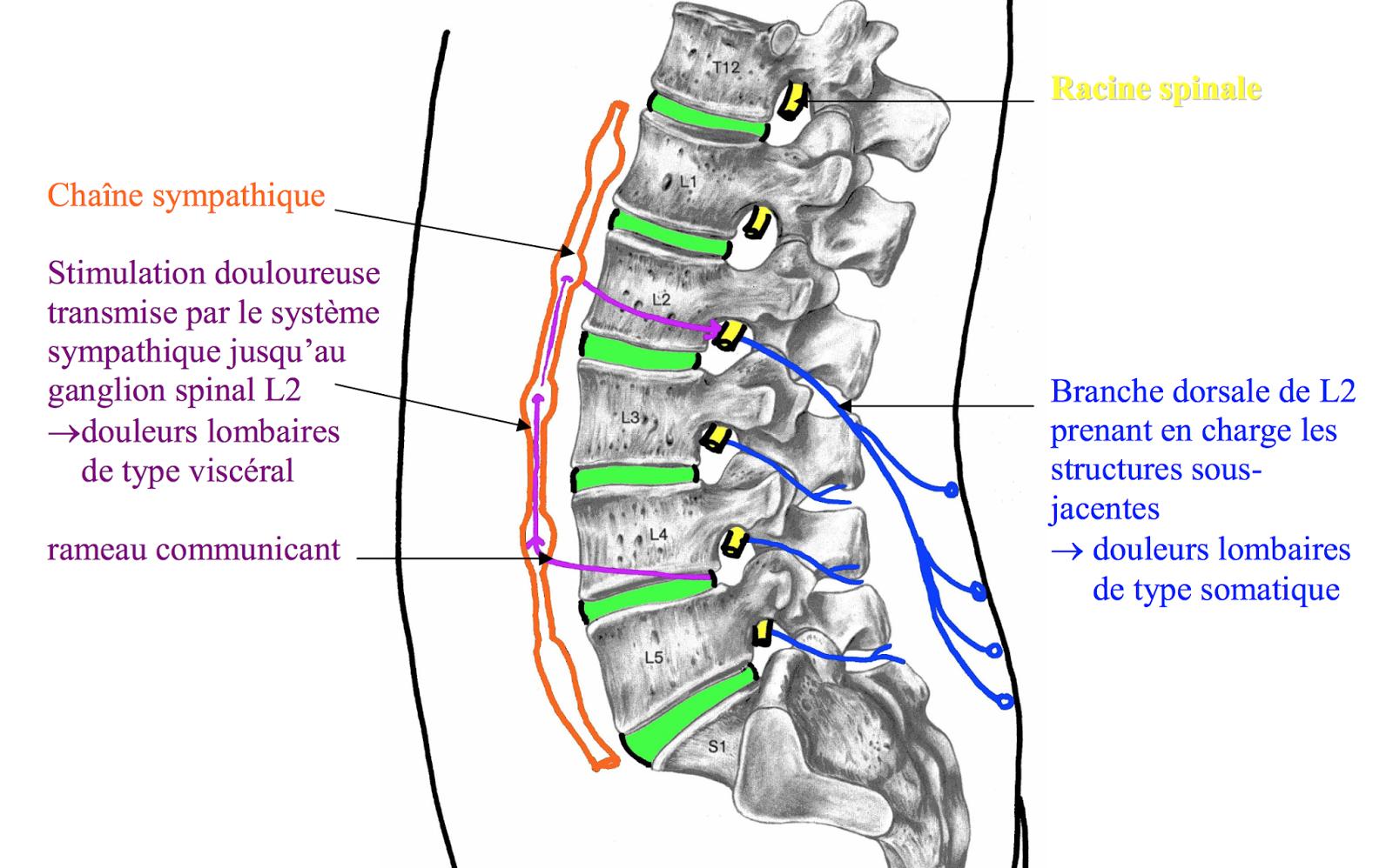 La douleur de la droite de lintestin rend au dos