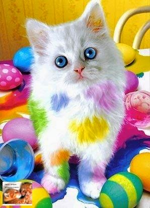 A kitten and Easter eggs