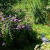 Jugar Caterpillar Horticulture Escape
