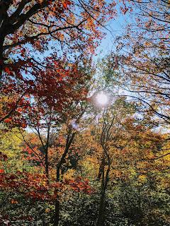 Sun Shining Through Maple Trees, Greenlink Trail, Cape Breton Island