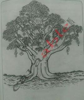 Contoh Gambar tes menggambar phon atau tes psikotes gambar pohon dengan pembahasan