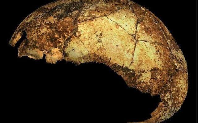 Νότια Αφρική: Ανακαλύφθηκε το αρχαιότερο κρανίο Homo erectus