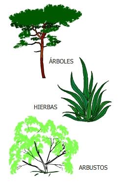 Las plantas mayo 2013 for Cuales son las partes de un arbol