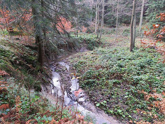 Meandry potoku.