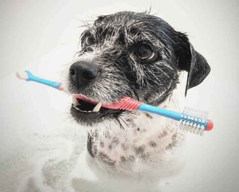 How often brush dog teeth