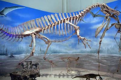 Fosseis dinossauros Museu Nacional RJ