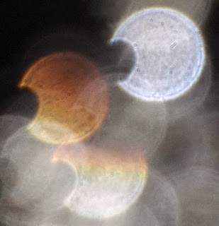 odd orange orb
