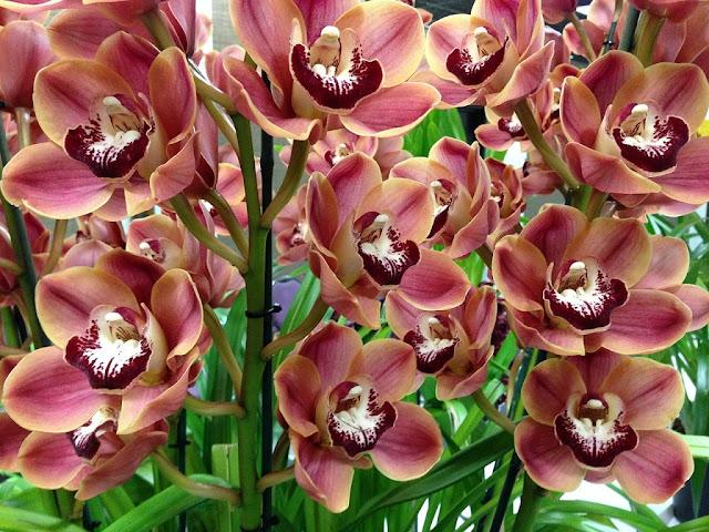 Orquídeas en floración