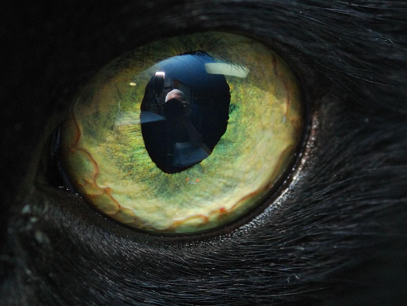 John Brown Black Cat