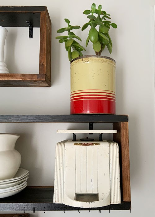 Vintage cans holding plants on wooden display shelves.