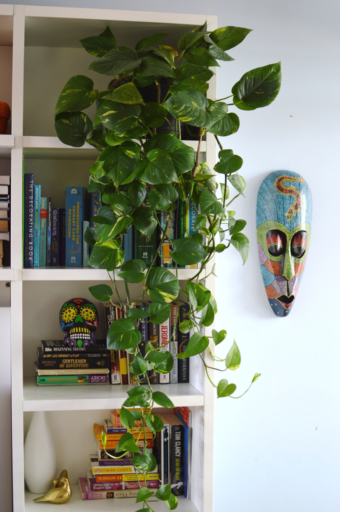 Add a bit of nature to your bookshelf with a pothos plant.