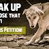 India में जानवरो के लिए वयवस्था है बेहद खराब | सरकार है नकारा, देख कर होता है दुख |