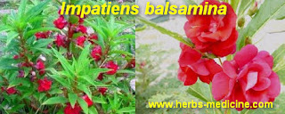 hypertension drugs make Impatiens balsamina