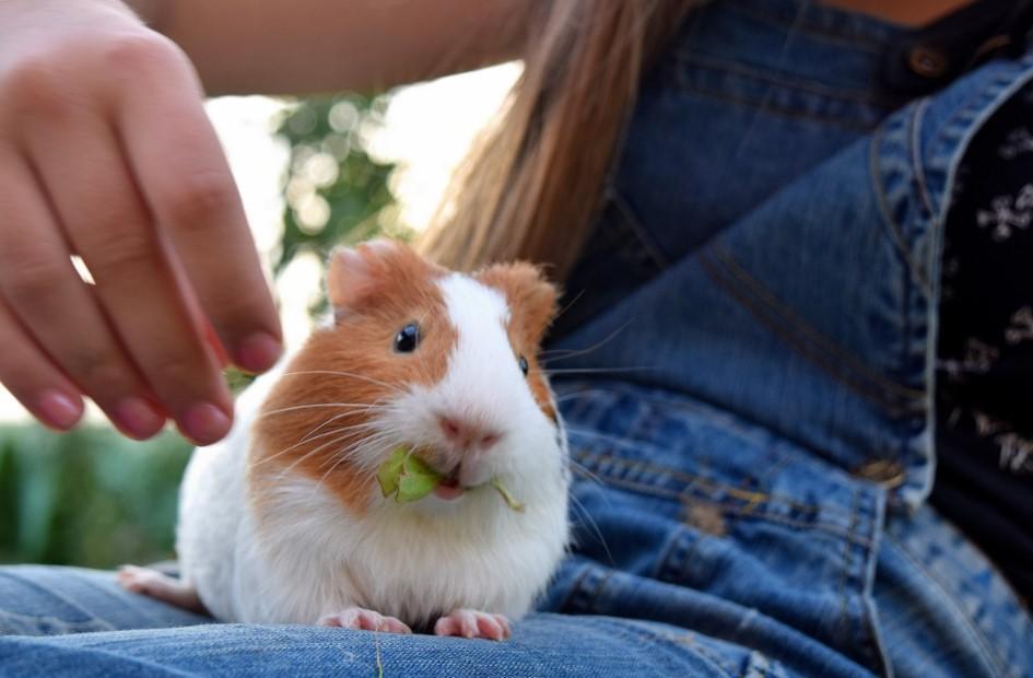 15 Makanan Hamster yang Sehat ini Patut Kamu Berikan