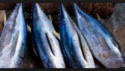 Manfaat dan Kandungan Gizi Ikan Tuna