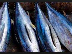 Manfaat dan Kandungan Gizi Ikan Tuna Untuk Kesehatan