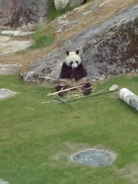lumi panda