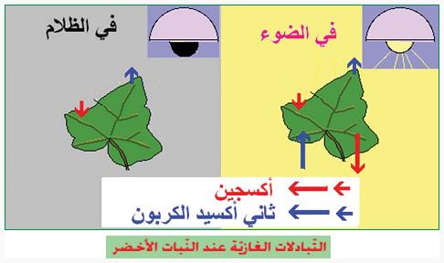 ملخص درس التبادلات الغازية و التركيب الضوئي للأولى باكلوريا
