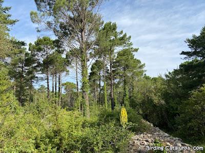 Boscos al voltant de la Mussara