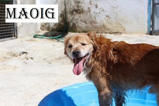 https://abydajaenblog.blogspot.com/2020/07/maoig-en-adopcion.html
