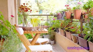 Tanaman-Hias-Untuk-Balkon