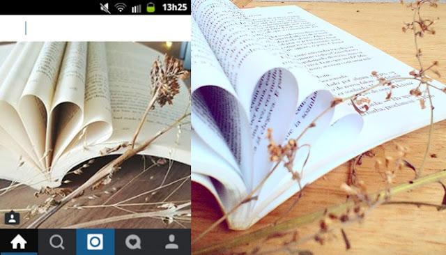 livro com folhas dobradas e galho tumblr