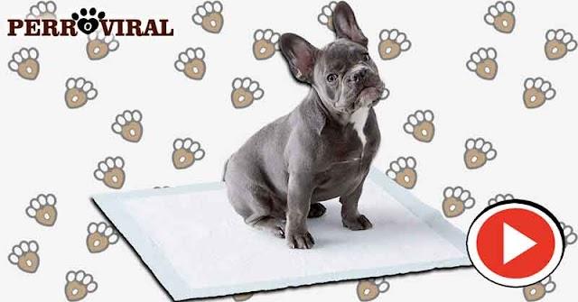 Qué son las famosas Toallitas de Entrenamiento para Perros