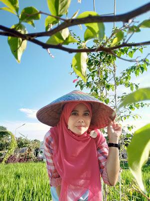 Kampoeng Sawah Batam