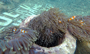 snorkeling teluk pahawang lampung