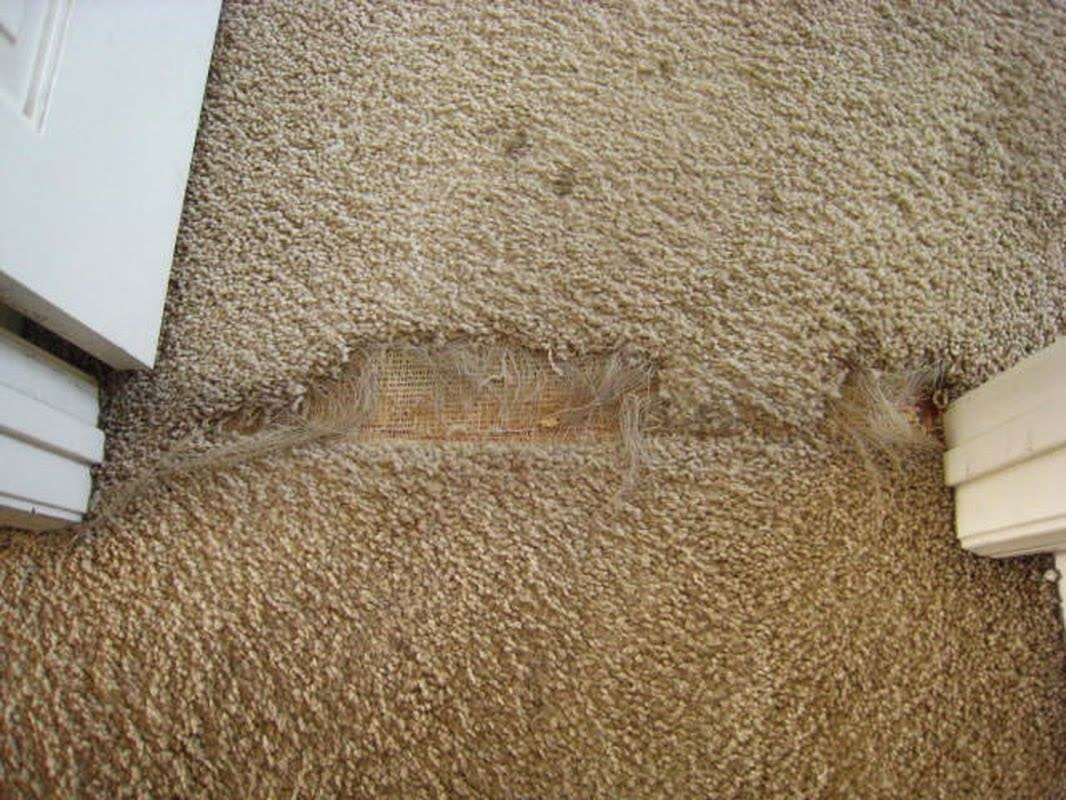 How To Stop Cats Scratching Carpets And Walls Lets See