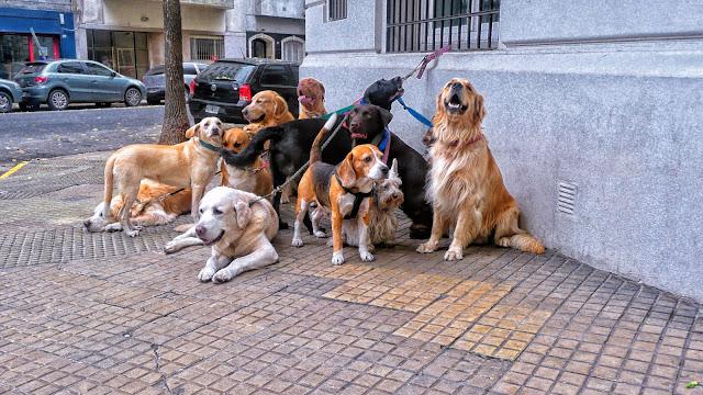Grupo de perros atados esperando en la vereda