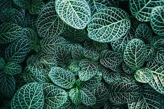 Une plante feuillue