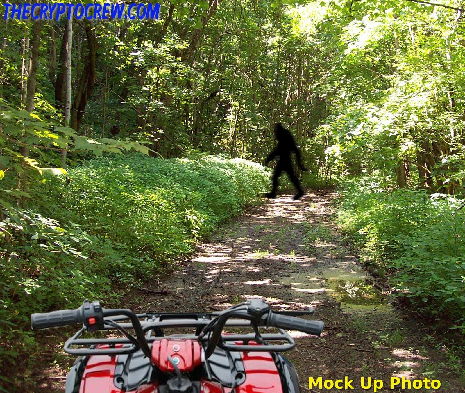 atv rider has bigfoot sighting the crypto crew