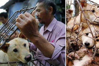 Konsumsi Daging Anjing di Jogjakarta Lebih Besar Dibanding Jakarta?