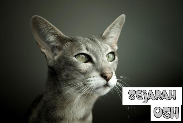 Sejarah Kucing OSH