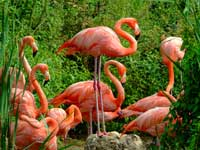 Flamingo Puzzle Game