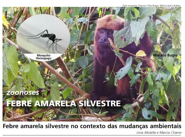 Foto mosquito: Fiocruz / Foto Bugio: Maria Lúcia Cardoso