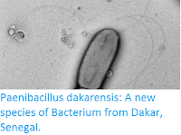 http://sciencythoughts.blogspot.com/2016/05/paenibacillus-dakarensis-new-species-of.html