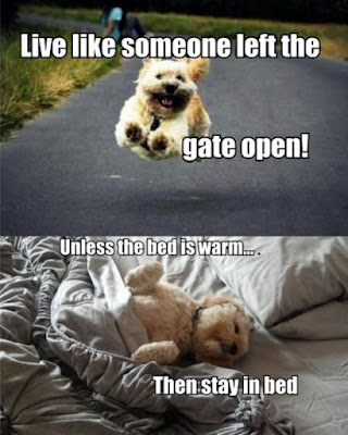 Funny Dog Humor : Live like someone opened the front door
