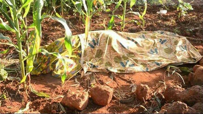 Mwanaume Afia Kifuani Mwa Mwanamke Wakishiriki Tendo la Ndoa kwenye Shamba la Mahindi