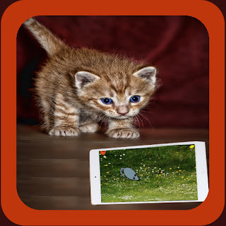 Cat Toys Android App - Entertain Your Cat!