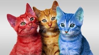 ما تفسير رؤية القطط الصغيرة الملونة في المنام