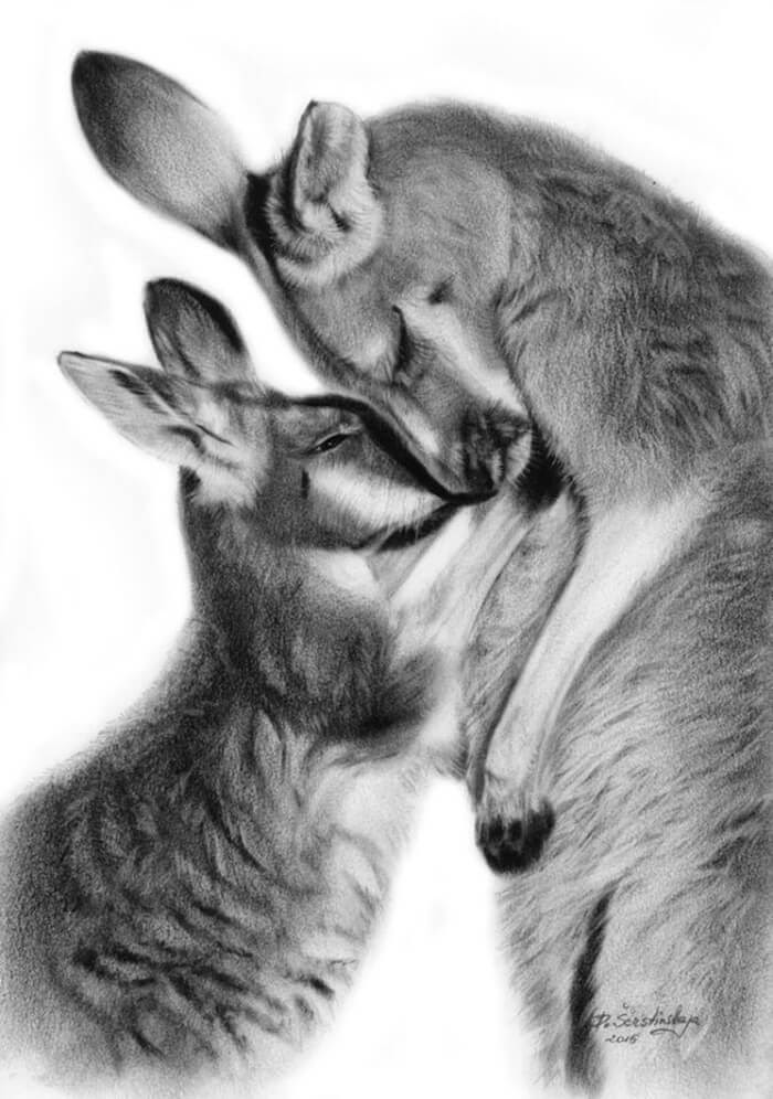 08-Kangaroos-Danguole-Serstinskaja-Animal-Dry-Brush-Technique-Paintings-www-designstack-co