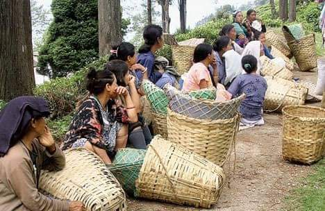 Darjeeling tea Workers on a hunger strike for a 20% annual festive bonus.